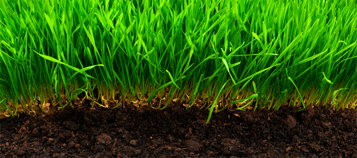 Healthy Turf and Soil