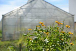 Aquatrols Pollinator Garden & Greenhouse