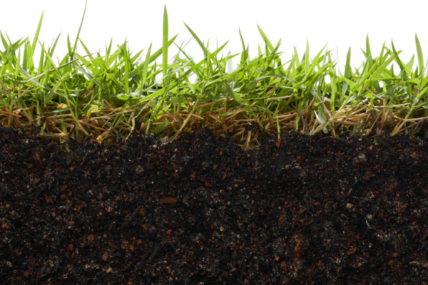 Key Nutrients for Healthy Turf