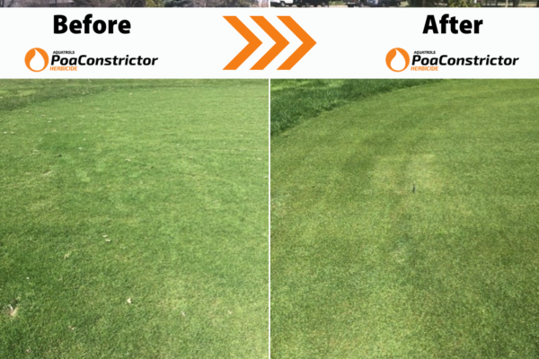 Renovating Fairways with PoaConstrictor®
