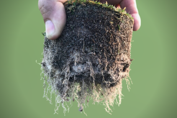 Tasty Turf Recipes: Managing Root Dysfunction